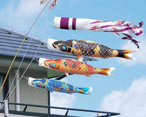 ベランダ鯉
